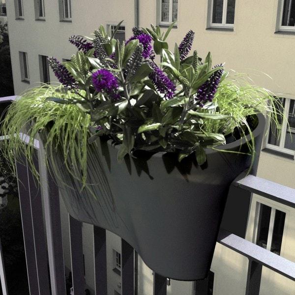 rephorm Blumenkasten STECKLING DUO anthrazit
